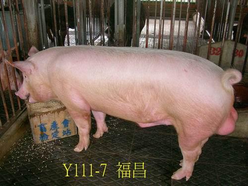 中央畜產會200505期Y0111-07拍賣照片