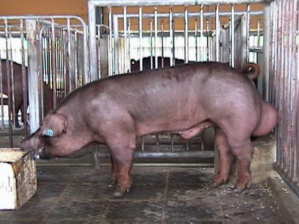 中央畜產會200005期D0475-11拍賣照片