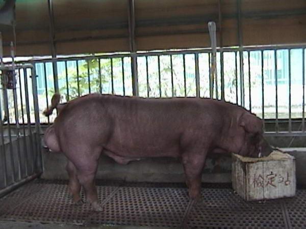 中央畜產會200005期D0485-11拍賣照片
