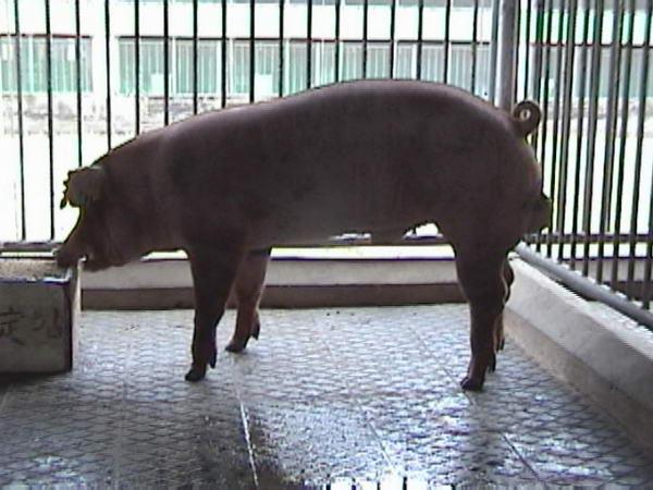 中央畜產會200005期D1584-05拍賣照片