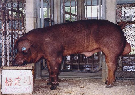 中央畜產會200007期D0070-04拍賣照片
