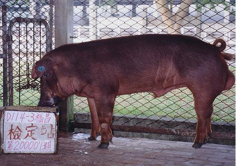 中央畜產會200007期D0114-03拍賣照片
