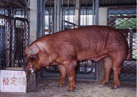 中央畜產會200007期D0244-06拍賣照片