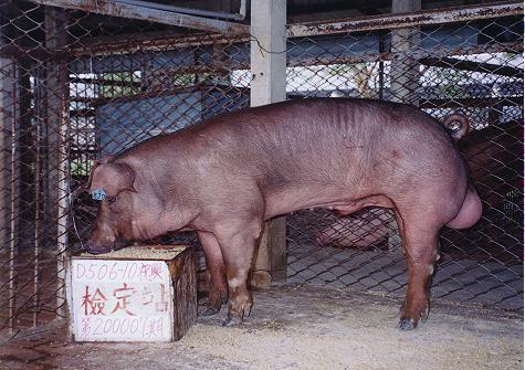 中央畜產會200007期D0506-10拍賣照片