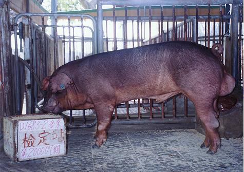 中央畜產會200007期D1683-02拍賣照片