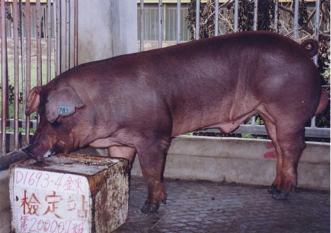 中央畜產會200007期D1693-04拍賣照片