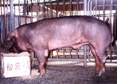 中央畜產會200009期D0061-11拍賣照片