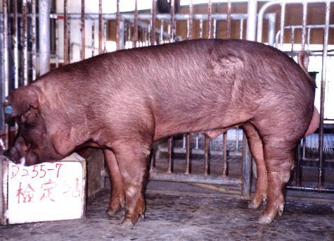 中央畜產會200009期D0255-07拍賣照片