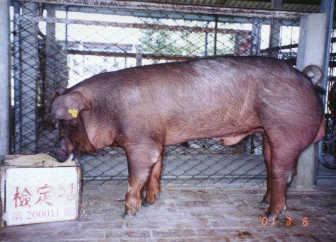 中央畜產會200011期D0004-02拍賣照片