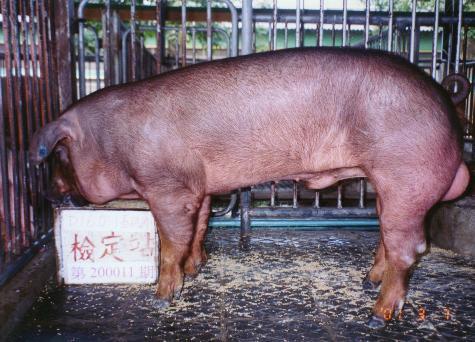 中央畜產會200011期D0160-01拍賣照片