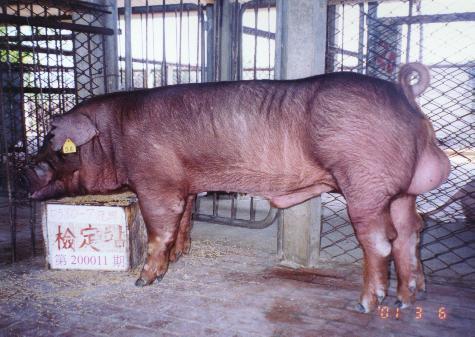 中央畜產會200011期D0580-07拍賣照片