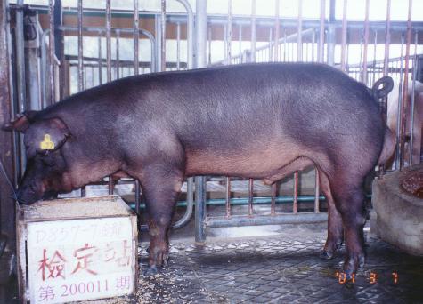中央畜產會200011期D0857-07拍賣照片