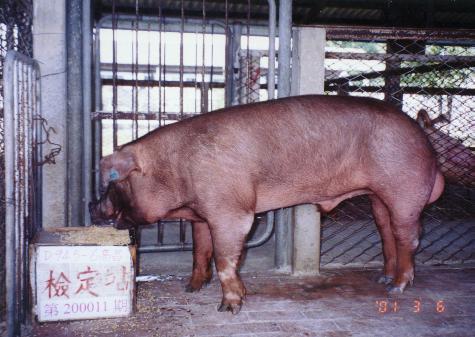 中央畜產會200011期D0945-06拍賣照片