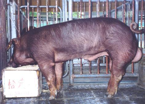 中央畜產會200101期D0388-02拍賣照片