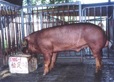 中央畜產會200101期D0886-01拍賣照片