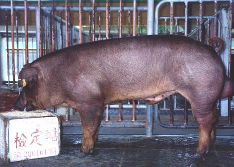 中央畜產會200101期D0955-02拍賣照片