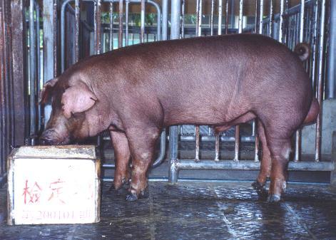 中央畜產會200101期D1572-04拍賣照片