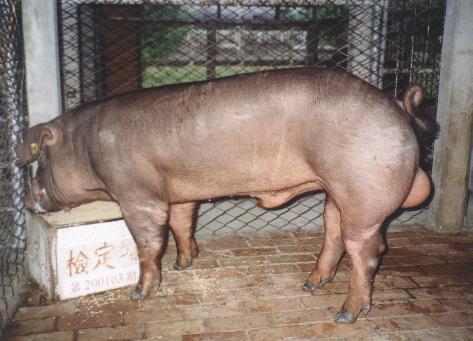 中央畜產會200103期D0046-03拍賣照片