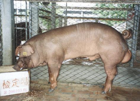 中央畜產會200103期D0075-02拍賣照片