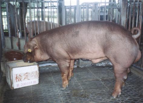 中央畜產會200103期D0076-01拍賣照片