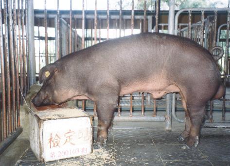 中央畜產會200103期D0905-03拍賣照片
