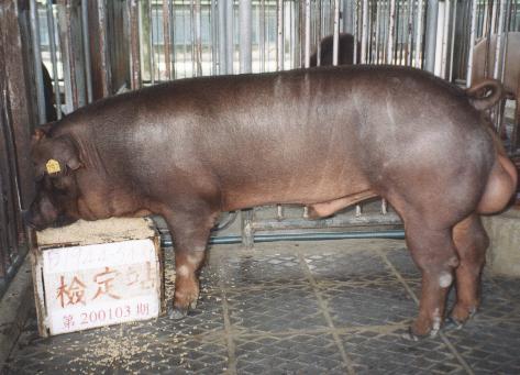 中央畜產會200103期D1944-05拍賣照片