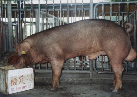 中央畜產會200105期D0114-08拍賣照片
