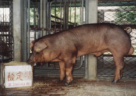 中央畜產會200105期D0204-03拍賣照片