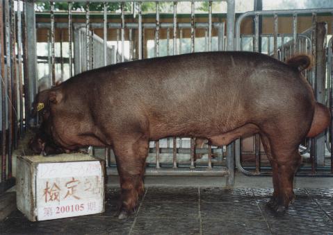 中央畜產會200105期D0675-08拍賣照片