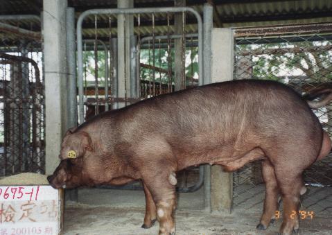中央畜產會200105期D0675-11拍賣照片