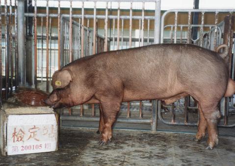 中央畜產會200105期D1323-10拍賣照片