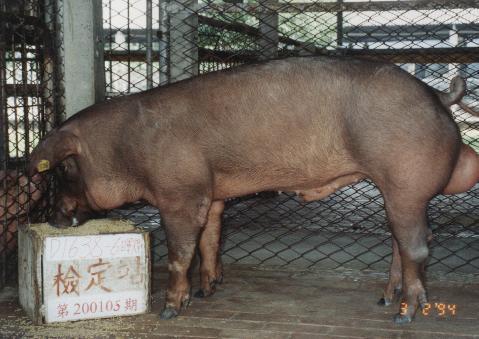 中央畜產會200105期D1638-06拍賣照片