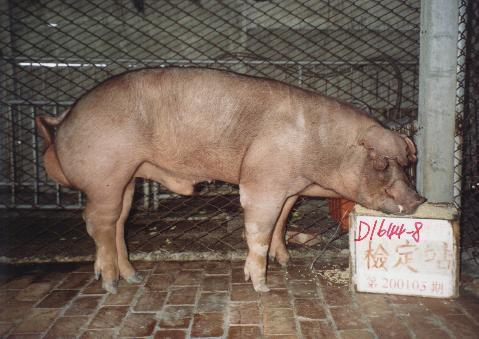中央畜產會200105期D1644-08拍賣照片