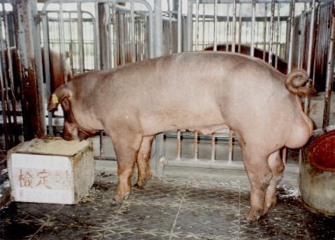 中央畜產會200107期D0136-09拍賣照片