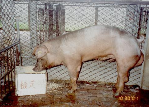 中央畜產會200107期D0167-10拍賣照片