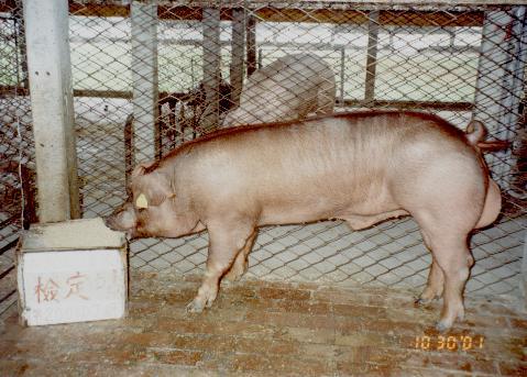 中央畜產會200107期D0308-01拍賣照片