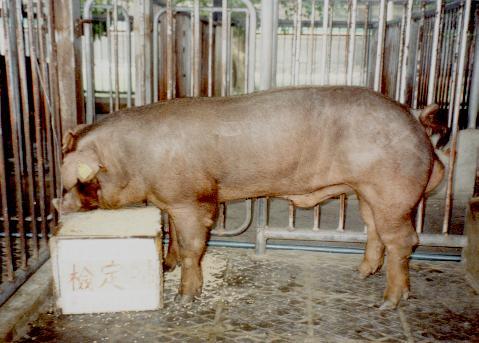 中央畜產會200107期D0626-04拍賣照片