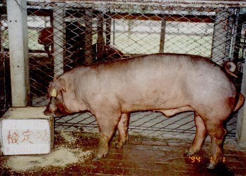 中央畜產會200107期D0626-05拍賣照片