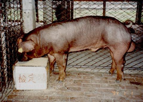 中央畜產會200107期D0705-06拍賣照片