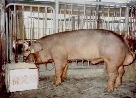 中央畜產會200107期D0715-10拍賣照片