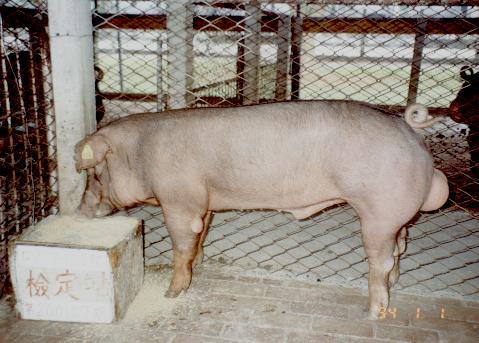 中央畜產會200107期D0977-10拍賣照片