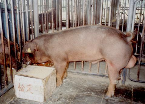 中央畜產會200107期D1922-01拍賣照片