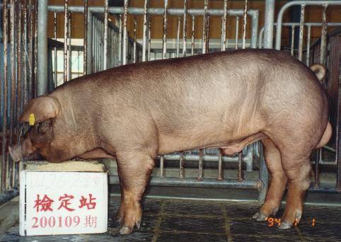 中央畜產會200109期D0426-02拍賣照片