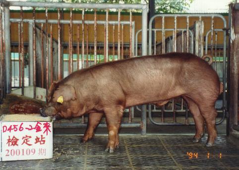 中央畜產會200109期D0456-02拍賣照片