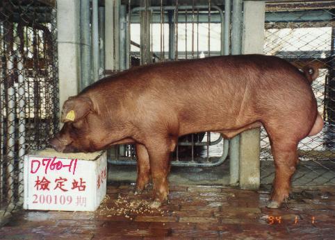 中央畜產會200109期D0760-11拍賣照片