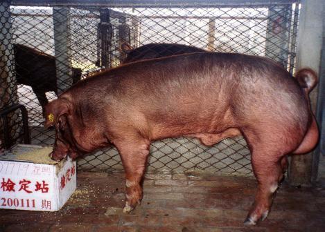 中央畜產會200111期D0777-09拍賣照片