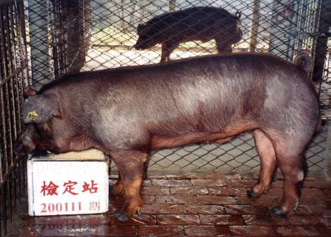 中央畜產會200111期D1949-01拍賣照片