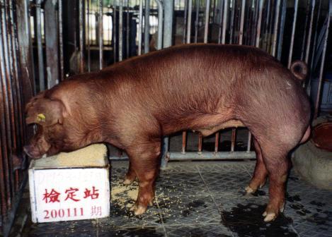 中央畜產會200111期D1953-01拍賣照片