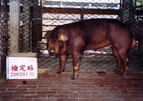 中央畜產會200201期D0059-10拍賣照片