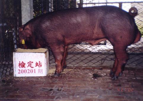 中央畜產會200201期D0789-08拍賣照片